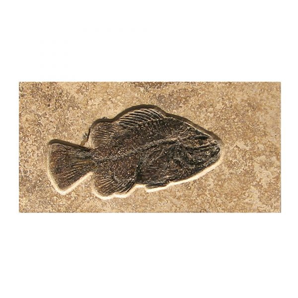 Fossil Tile (Combination) PR48_S115