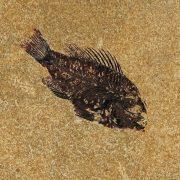 Fossil Tile (Honed) PR66_H053 3