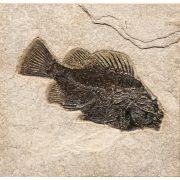 Fossil Tile (Natural) PR66_N201