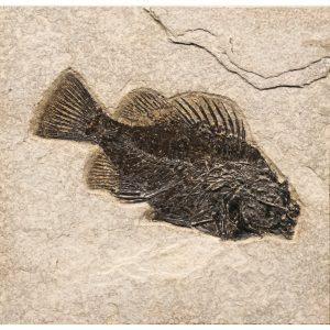 Fossil Tile (Natural) PR66_N201