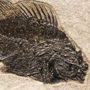 Fossil Tile (Natural) PR66_N201 3