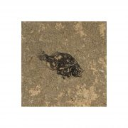 Fossil Tile (Honed) PR88_H039