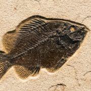 Fossil Tile (Natural) PR88_N240 3