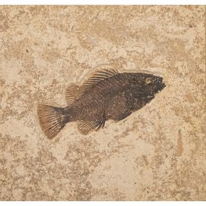 Fossil Tile (Combination) PR88_S207
