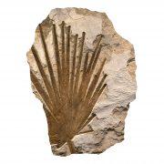 Fossil Mural Q080814003am