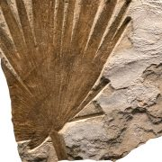Fossil Mural Q080814003am 3