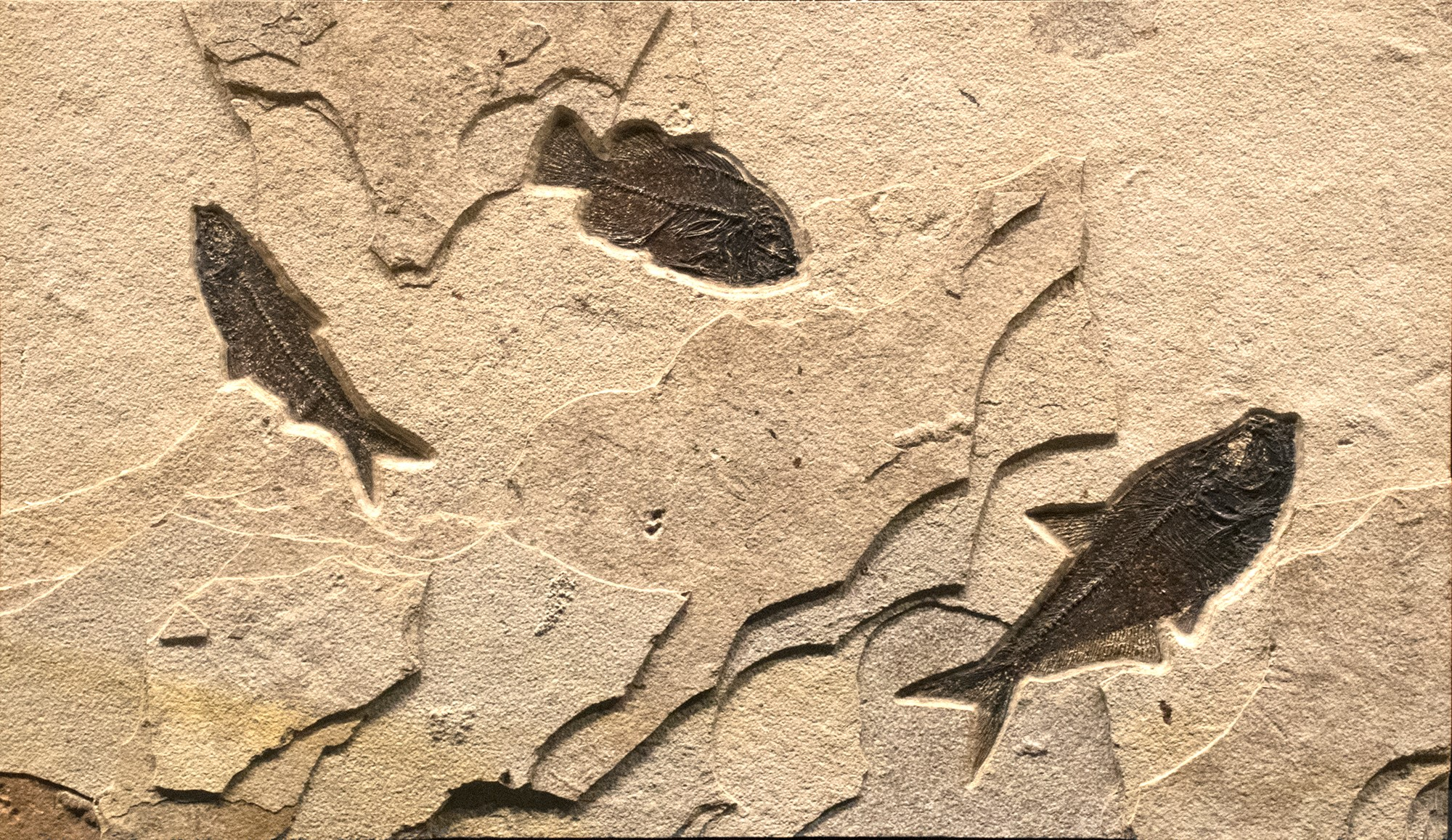 Fossil Collector Mural 02_180416510AM