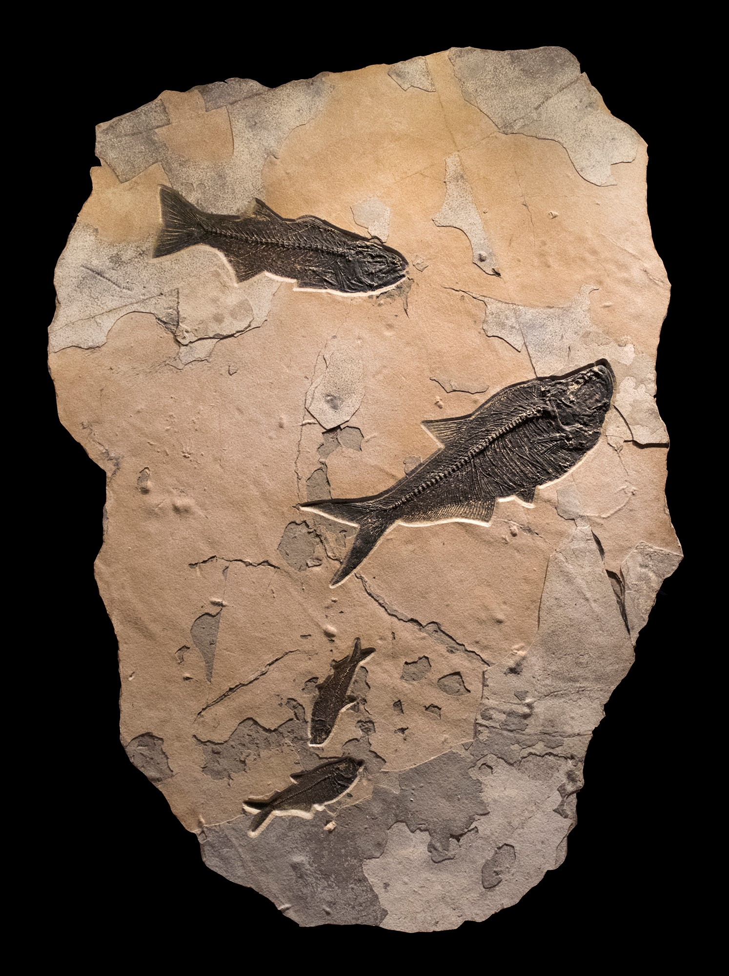 Fossil Collector Mural 02_Q110622001CM