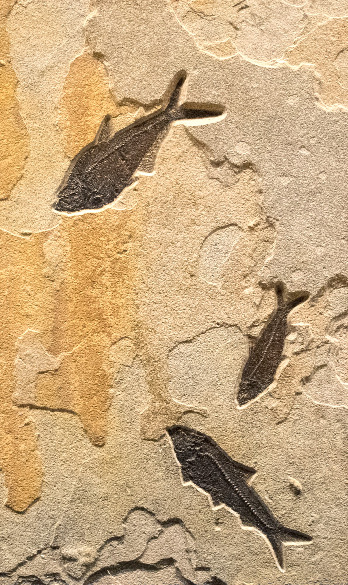Fossil Collector Mural 02_Q120711012AM